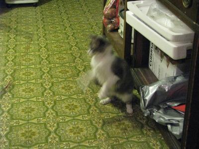 Weasel Attempt
