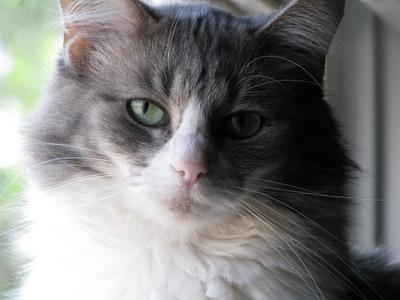 Kitty 010