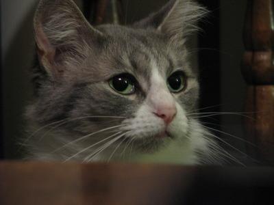 Cat Play 001
