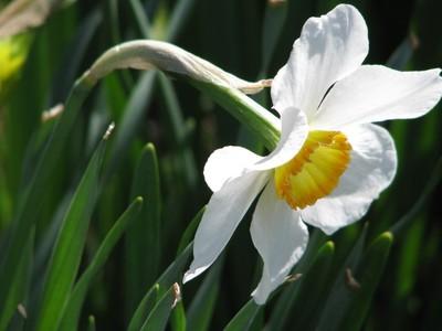 Daffodil Festival 033
