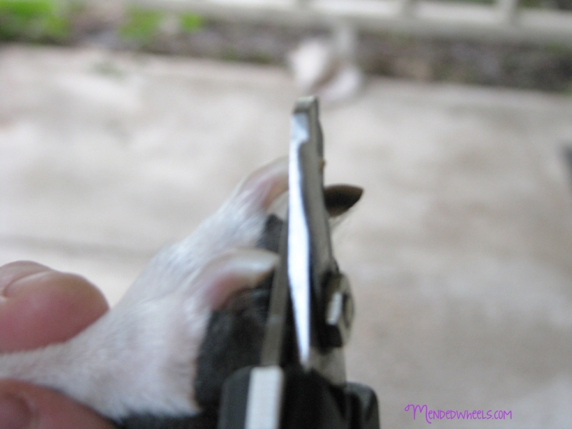 Are you too scared to trim your pets nails?  This easy tutorial shows you what supplies to use and how to do it!